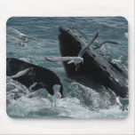 Humpback Whale Mouse Pad