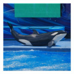 Orca Whale Showing Off Poster